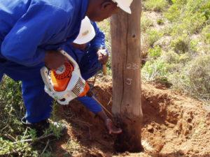 Idube Utility Wood Pole Inspections-01