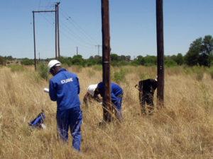 Idube Utility Wood Pole Inspections-02