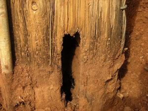 Idube Utility Wood Pole Inspections-07