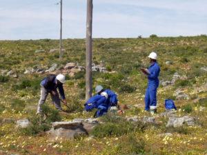 Idube Utility Wood Pole Inspections-11