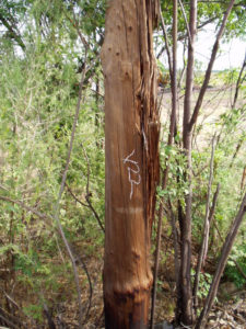Idube Utility Wood Pole Inspections-14