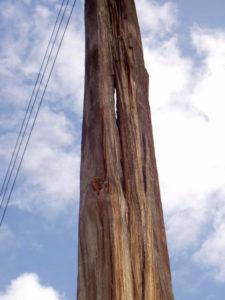 Idube Utility Wood Pole Inspections-16